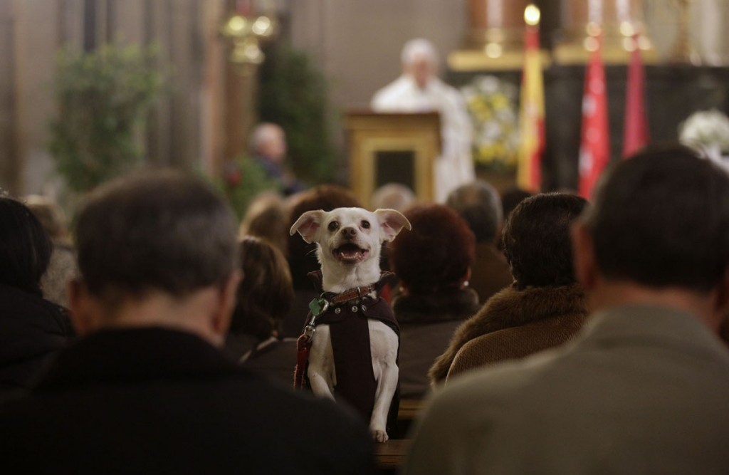A dog takes part in a mass at San Anton Church in Madrid
